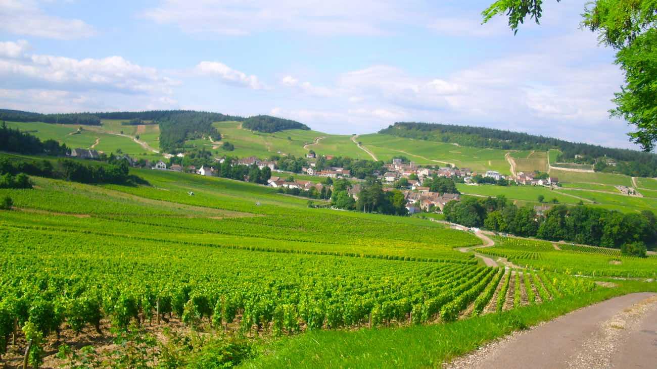vinos-borgona-francia